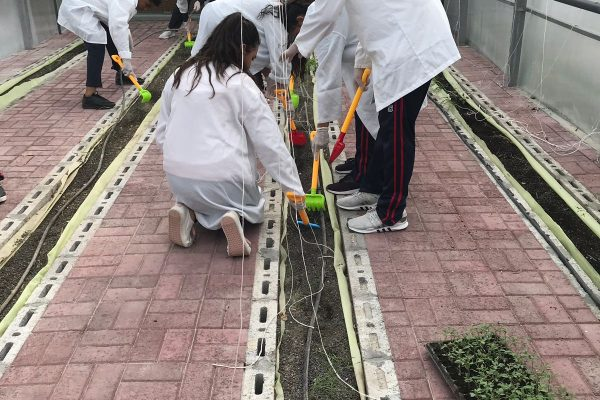 Green-committee-planting-activity10