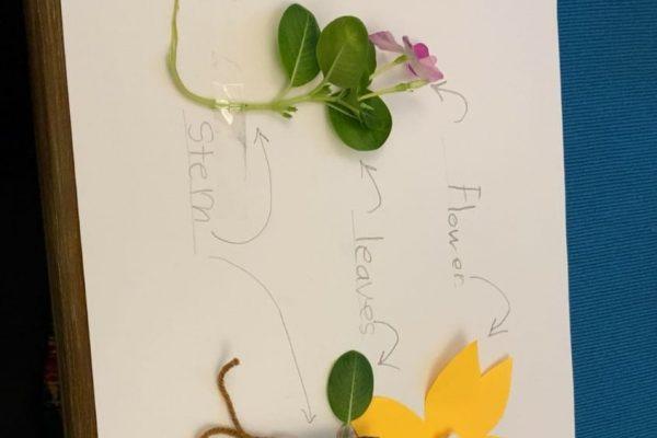 AHIS-PlantingActivity2020-19