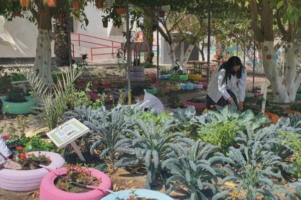 agricultural production exhibition(2021)6